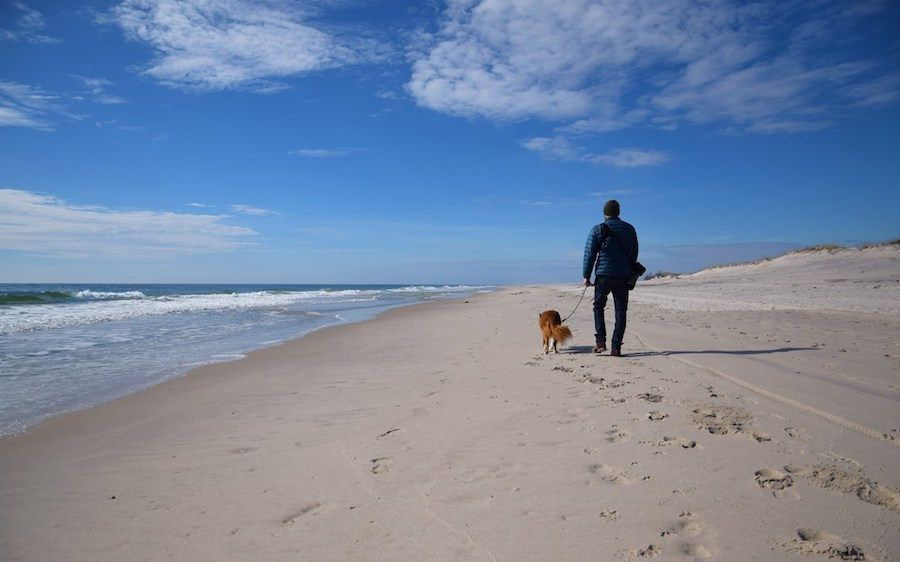 dog friendly beaches on Long Island